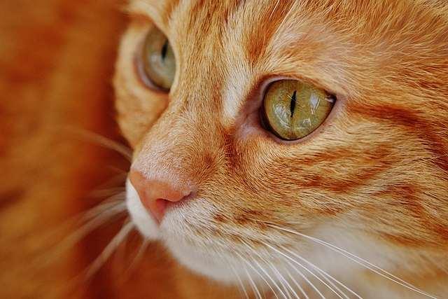 Bolehkah Mengebiri Binatang?